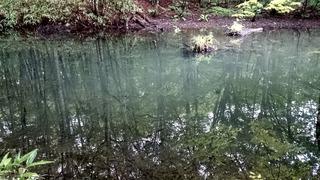 蔦の小沼2