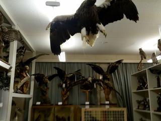 歴史と自然の資料館2