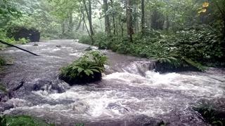 奥入瀬渓流4