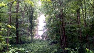 奥入瀬白布の滝
