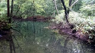 蔦の小沼1