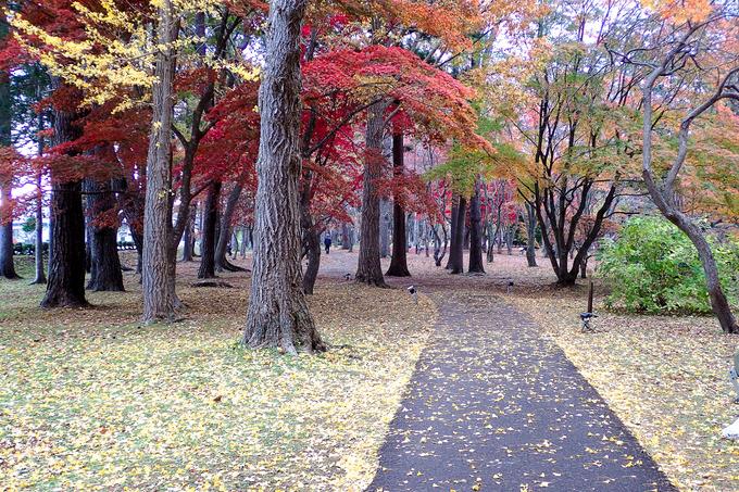 名残の紅葉 香雪園