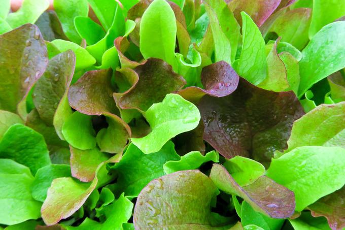 温室内の野菜工場