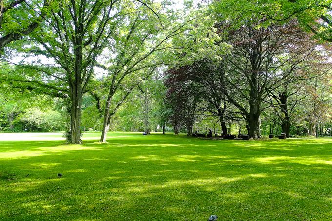 北海道大学植物園 ②樹木編