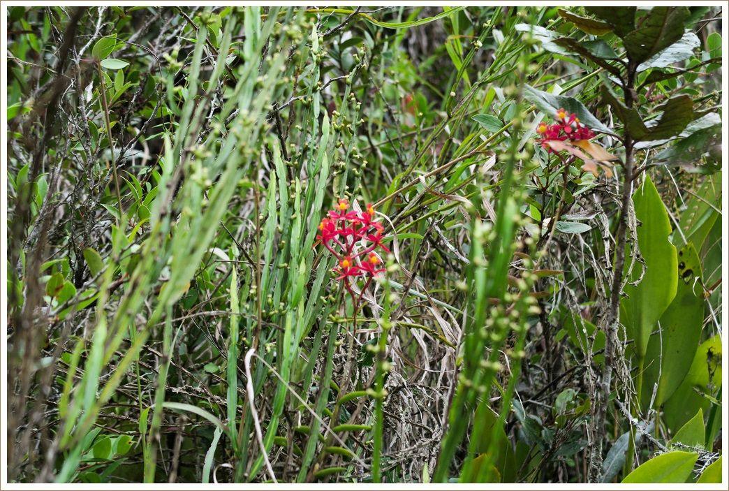 インカ道 道端の花々 その2