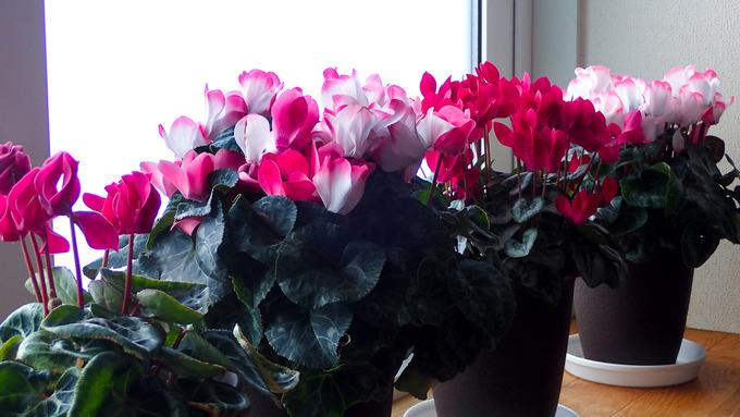 雪国の人は赤い花が好み・・・?