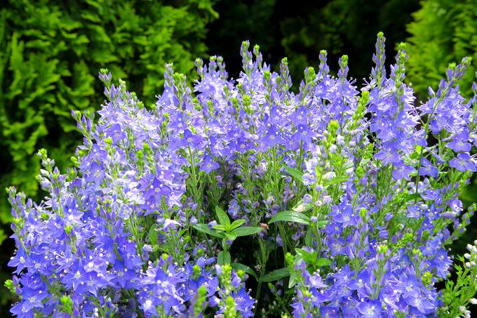 初夏の庭の花々