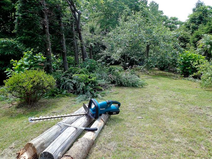 今日は一日 woodcutter
