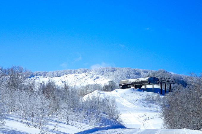 これ以上は望めないスキー日和