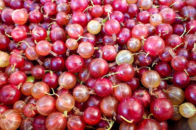グーズベリーの収穫