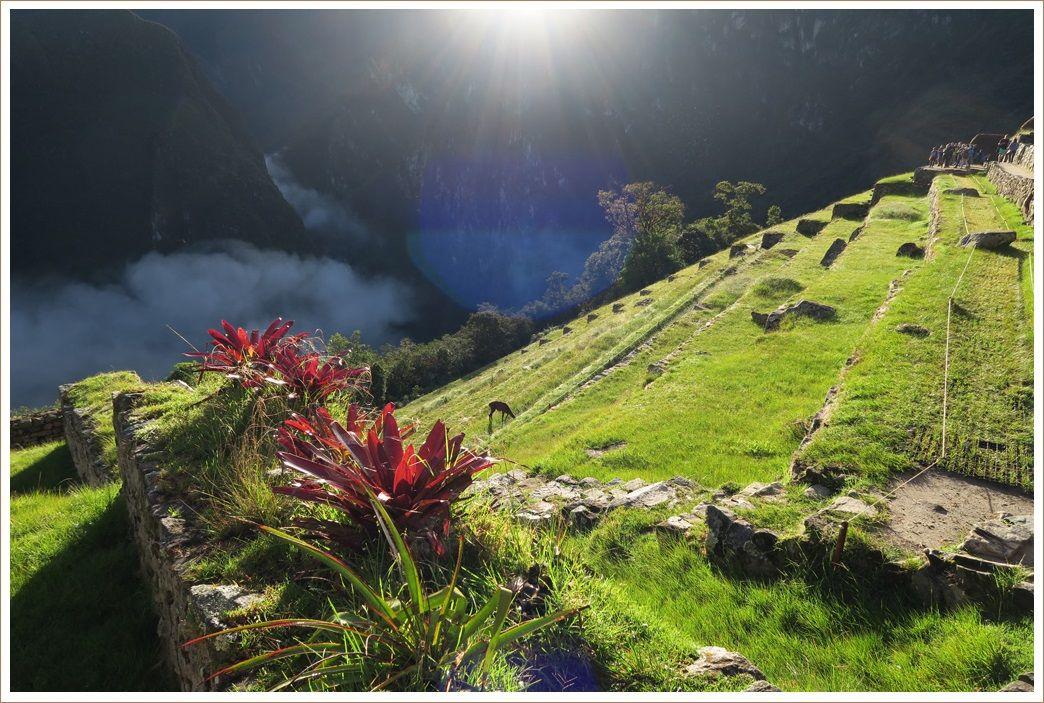 朝日に輝くマチュピチュ遺跡