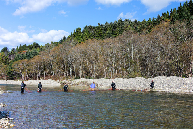 遡上する鮭を見に茂辺地川へ