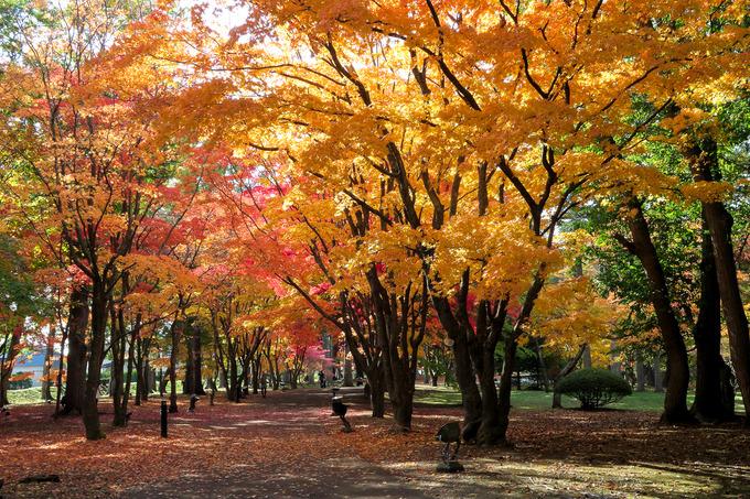 函館の紅葉はここが一番かな ①