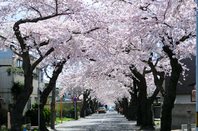 桜が丘通りへ