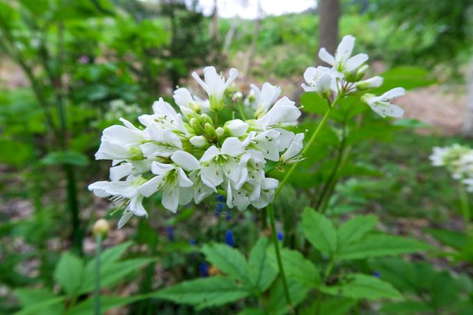 白い花の咲くころ その4