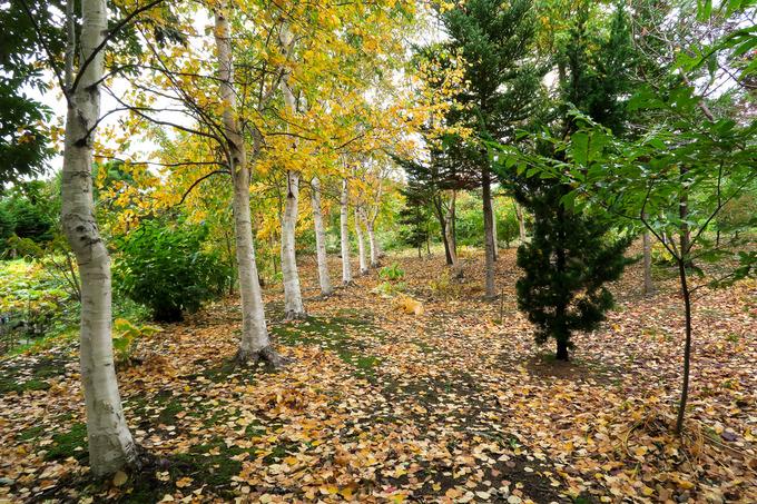 雑木林にも落ち葉のカーペットが