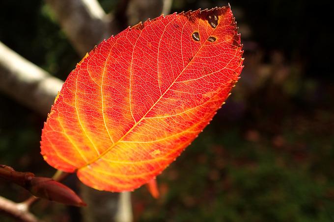 我が家の庭も秋色に ジューンベリー