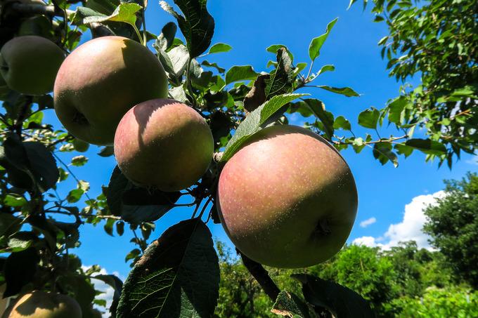リンゴ台風にならないことを祈って