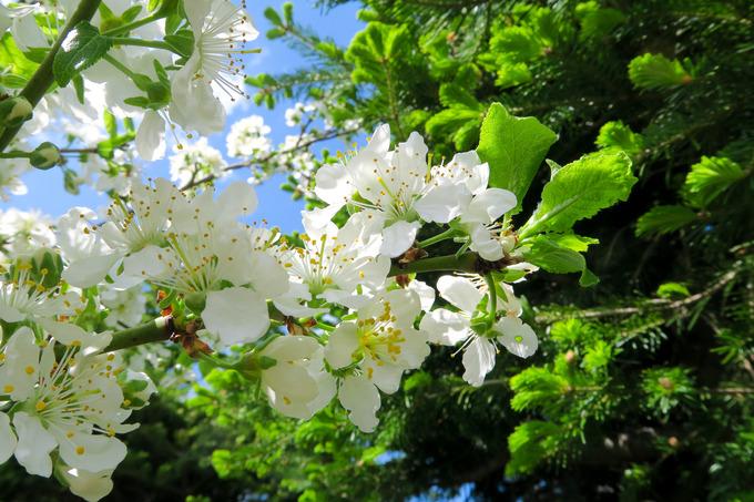白い花の咲くころ その2