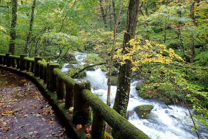 土砂降りの奥入瀬渓谷