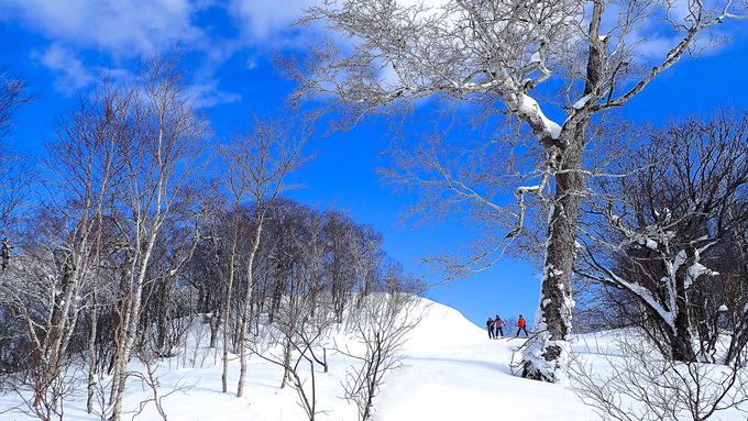 こんな晴天にスキーかよ