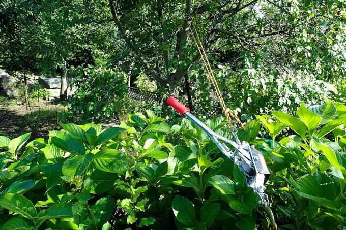 プルーンの木の修復