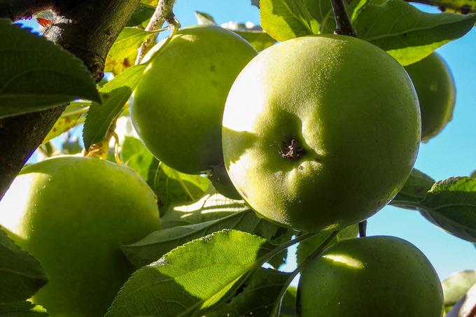 apple8