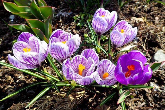 元気いっぱいの春景色