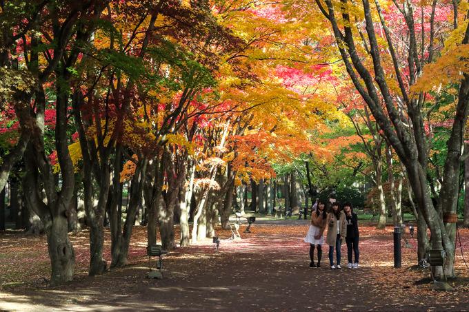 函館の紅葉はここが一番かな ②