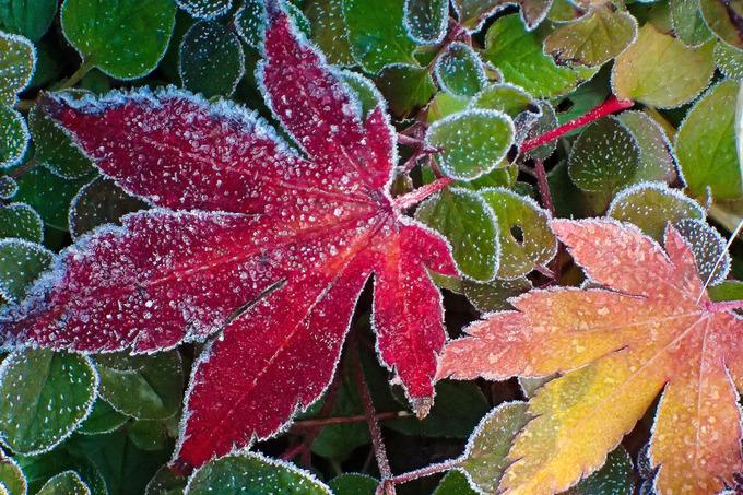 凍てつく朝の一瞬の輝き