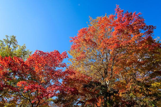 紅葉の大沼湖畔を一周