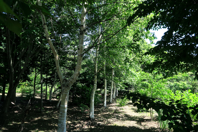 木漏れ日の雑木林