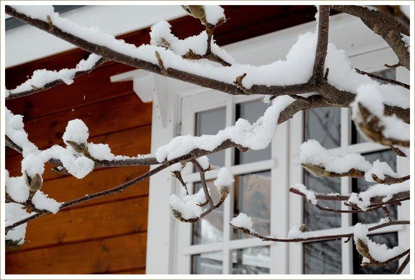 しんしんと降りしきる雪