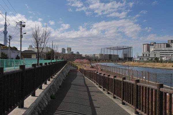 河津桜散歩