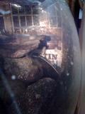隠れるカエル