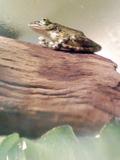 カエルなに思う