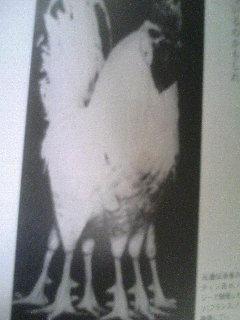 ケンタッキーの工場には足の本数が異常に多い鶏がいるらしい信じるか信じないかはあなた次第らしい