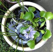 水鉢ビオトープレイアウト例