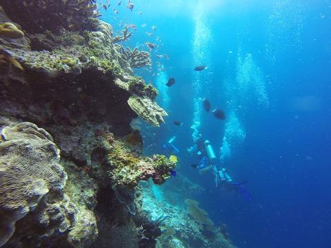 scuba-diving-1300849_960_720