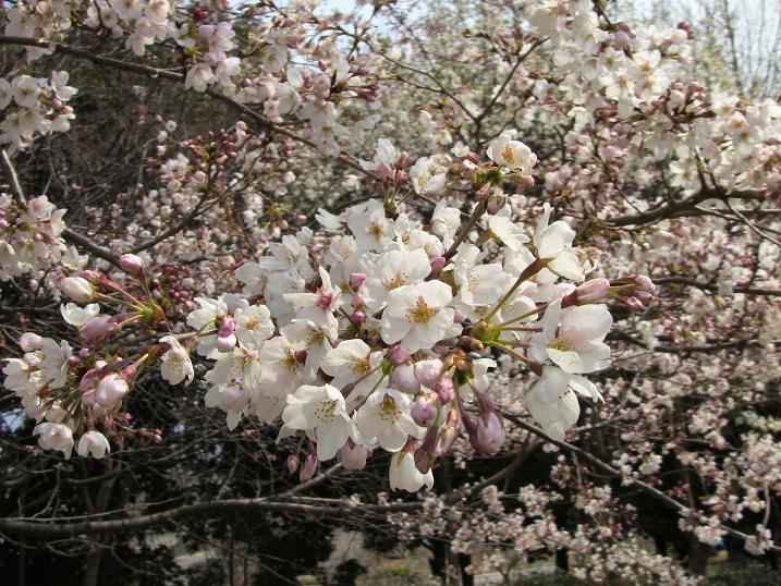 2010 spring 027