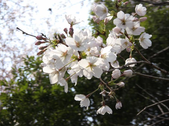 2010 spring 023