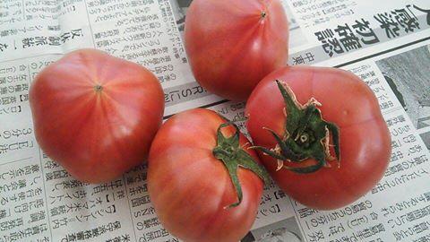 ファースト・トマト