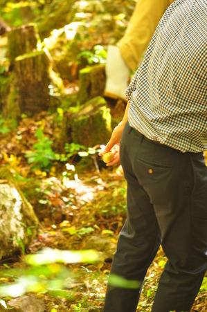 紅葉山 松茸