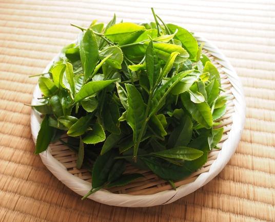 茶摘み (3)