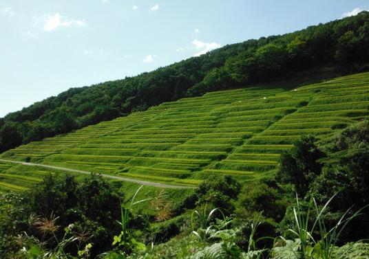 7-渡辺風景