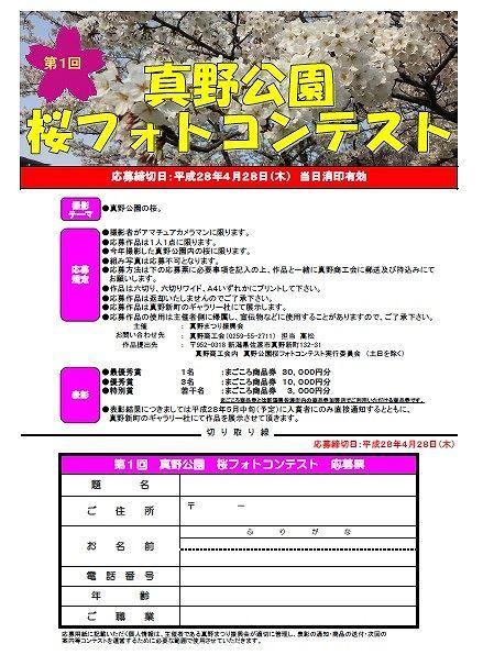 桜フォトコンテスト