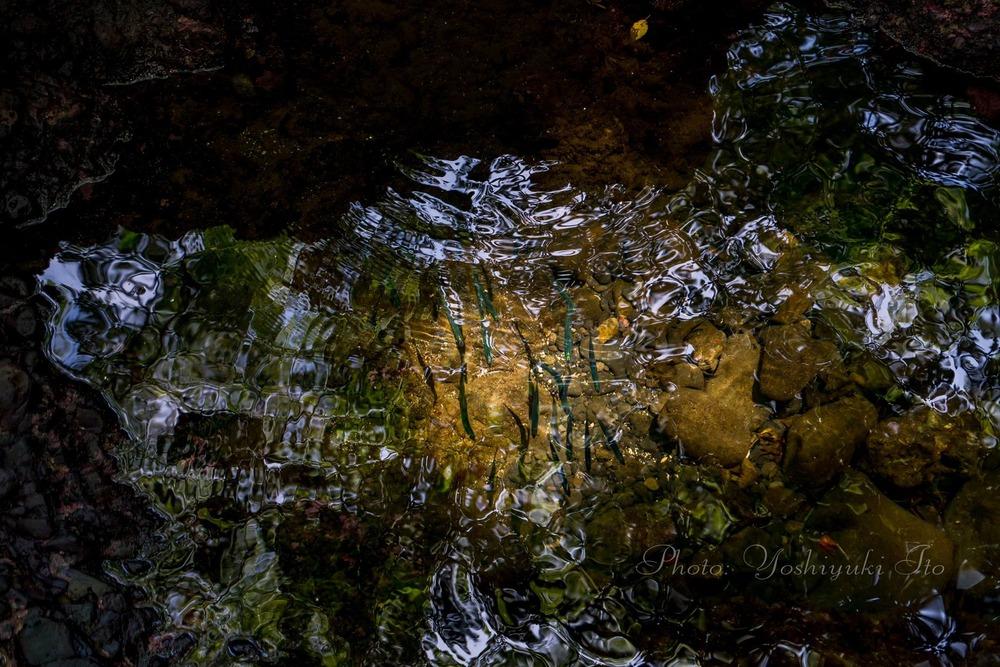 虫谷の入江