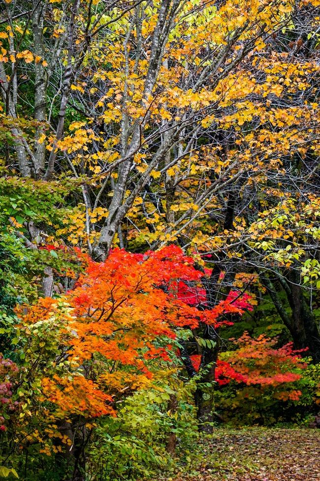 1紅葉山2016
