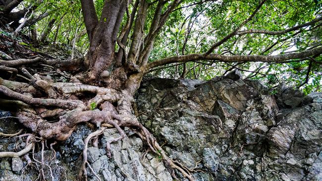 見立ての木々2-2