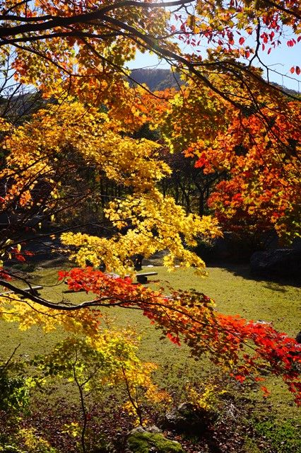佐渡紅葉山公園12